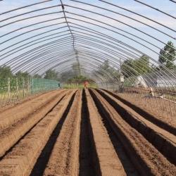 草莓定植门道多,整地也这么重要,你做对了吗?