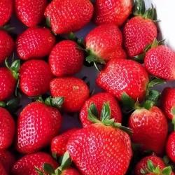 草莓产地批发价格行情(2019年12月25日)